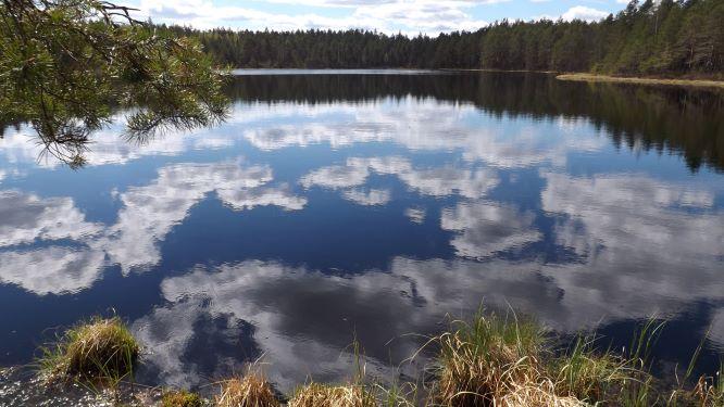 Järvimaisemaa Suomusjärveltä