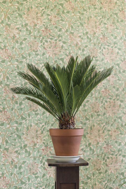 Ruukussa kasvava pieni palmu. Huonekasvi. Taustalla vanhanaikainen tapetti.